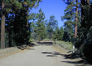 Dirt Forest Roads