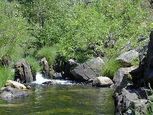 Sierra Streamside Camps