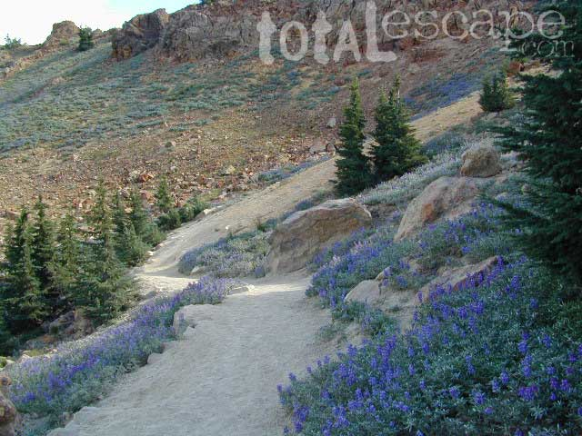 Lupine Hikes to Lassen Peak