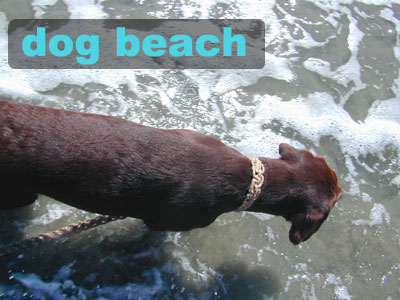 Dog Parks, DogBeach