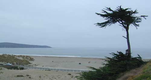 bodega bay big and beautiful singles Bodega harbour south - the horizon house is a 2 bedroom, 2 bath home with a loft nice views of the ocean and the golf course 2nd story deck with expansive ocean views, nice patio area with charcoal bbq and outdoor furniture.