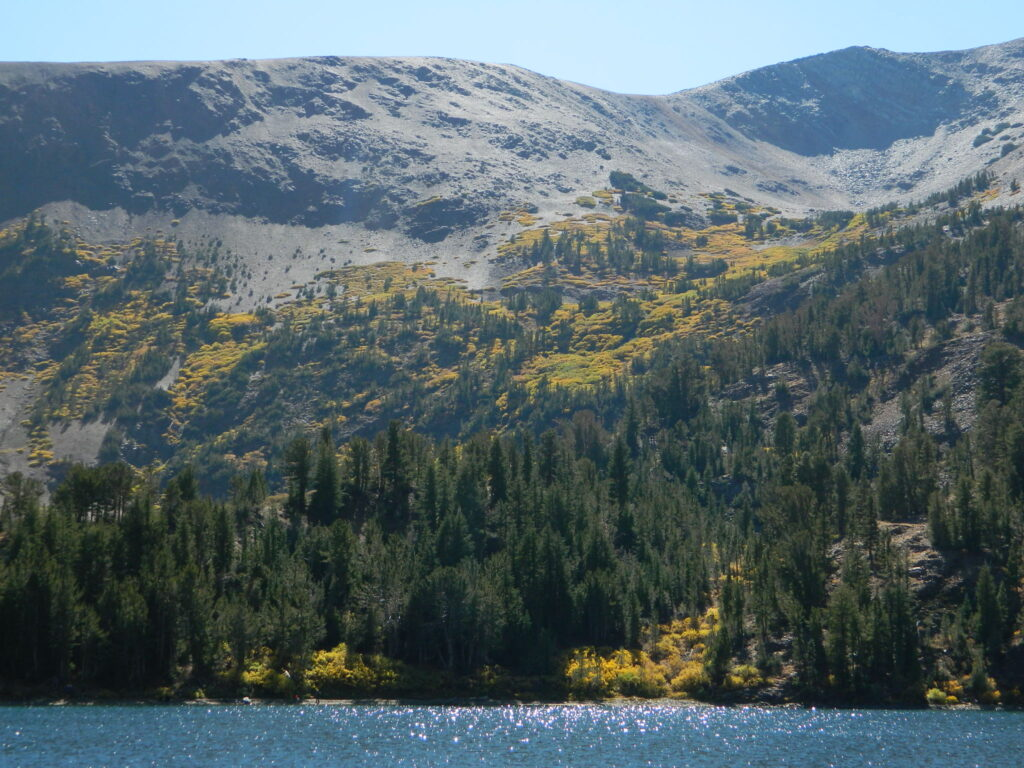 virginia lake aspens