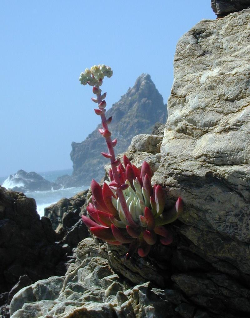 Pacific Jade Cove